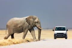 Olifant die weg kruist stock afbeeldingen