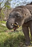 Olifant en haar kind Stock Afbeeldingen