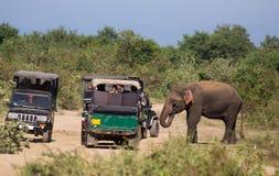 Olifant en safarivoertuig in Sri Lanka royalty-vrije stock foto's