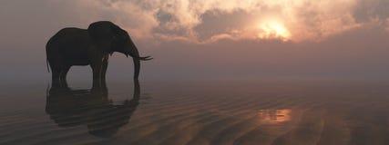 Olifant en zonsondergang stock illustratie