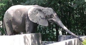 Olifant in gevangenschap stock foto's
