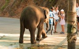 Olifant in gevangenschap in kettingen in Thailand stock foto's