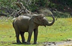 Olifant het bespuiten vuil en water op zich van zijn boomstam Royalty-vrije Stock Foto
