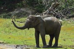 Olifant het bespuiten vuil en water op zich van zijn boomstam Stock Afbeelding