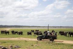 Olifant het letten op in het Nationale Park van Kaudulla, Sri Lanka stock afbeeldingen
