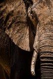 Olifant in het nationale park van Tarangire Royalty-vrije Stock Afbeeldingen