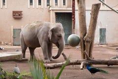 Olifant het spelen in een dierentuin stock foto's