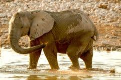 Olifant het Spelen met Water Royalty-vrije Stock Afbeelding