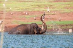 Olifant het spelen in water Royalty-vrije Stock Foto's