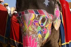 Olifant. India, Jaipur Stock Foto's