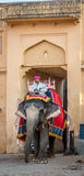 Olifant & Mahout in Amber Fort in Jaipur, India Royalty-vrije Stock Fotografie