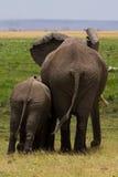 Olifant met baby Royalty-vrije Stock Afbeeldingen