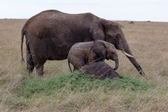 Olifant met baby in genomen Kenia wanneer op safari stock foto