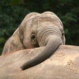 Olifant met boomstam op andere olifanten achter royalty-vrije stock fotografie