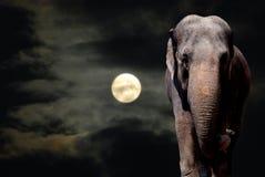 Olifant in Nacht Stock Afbeeldingen