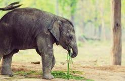 Olifant in Nepal Royalty-vrije Stock Foto