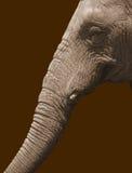 Olifant op bruin Royalty-vrije Stock Foto