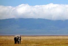 Olifant op safari in het NgoroNgoro-Behoudsgebied dichtbij Arusha, Tanzania wordt gezien dat stock fotografie