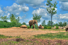 Olifant op savanne Royalty-vrije Stock Foto's