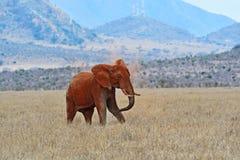 Olifant in Tsavo-park Royalty-vrije Stock Afbeeldingen