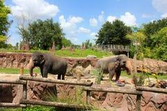 olifanten stock afbeeldingen