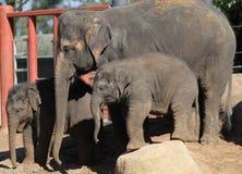 olifanten Royalty-vrije Stock Fotografie