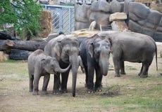 olifanten Royalty-vrije Stock Afbeeldingen