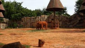 olifanten stock foto's