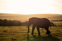 Olifanten in Addo Elephant National Park in Port Elizabeth - Zuid-Afrika royalty-vrije stock afbeeldingen