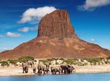Olifanten in Afrikaanse savanne Royalty-vrije Stock Afbeeldingen