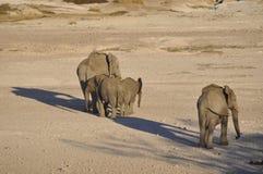 Olifanten bij de pensionair van de zoute pan in Etosha Nati stock fotografie