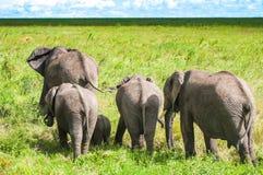 Olifanten bij het nationale park van Serengeti, Tanzania, Afrika Royalty-vrije Stock Foto