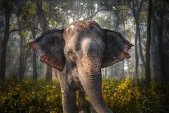 Olifanten in Chitwan Royalty-vrije Stock Foto's