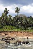 Olifanten in de rivier Stock Foto
