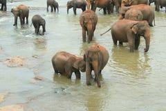 Olifanten in de rivier stock afbeelding