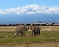 Olifanten in de savanne Royalty-vrije Stock Fotografie