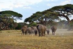 Olifanten in de savanne Royalty-vrije Stock Foto's
