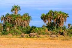 Olifanten in de wildernis Stock Foto's