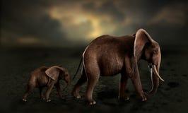 Olifanten die babyolifant in woestijn lopen Royalty-vrije Stock Foto