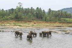 Olifanten die in de rivier baden Stock Foto's