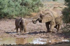 Olifanten die in het vuil spelen. Royalty-vrije Stock Afbeelding