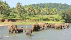 Olifanten die in het water spelen stock videobeelden