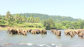 Olifanten die in het water spelen stock video