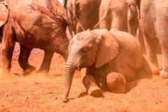 Olifanten die mudbath genieten van Royalty-vrije Stock Afbeelding