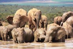 Olifanten die nat en modderig worden royalty-vrije stock afbeelding