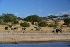 Olifanten die in Tanzania lopen Royalty-vrije Stock Foto