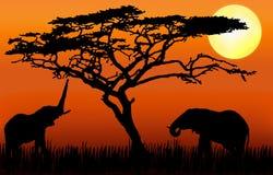 Olifanten die in zonsondergang eten Stock Afbeeldingen