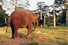 Olifanten in een stal royalty-vrije stock foto's