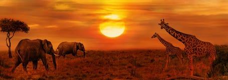 Olifanten en Giraffen bij Afrikaanse Savanne stock afbeelding