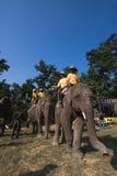 Olifanten en spelers, tijdens polospel, Thakurdwara, Bardia, Nepal stock afbeeldingen